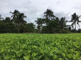 Cerlosa's peanut farm